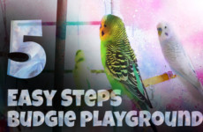 5 Easy Steps to Build your Custom Budgie Playground