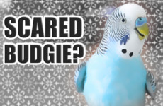 How to tell if your Bird is nervous or scared 😬