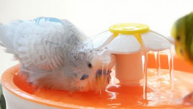 Photo of The easy way for Budgie Bath