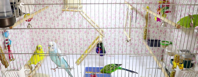 Best Budgie Cage Sizes and shapes
