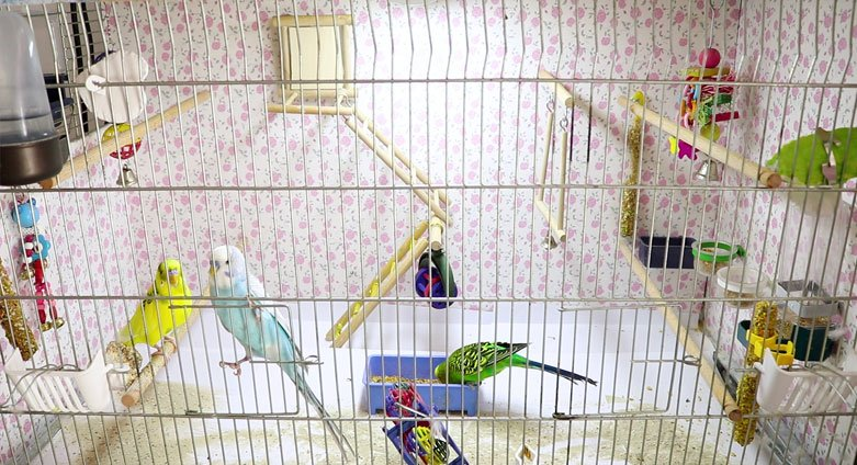 Best Budgie Cage Sizes and shapes – Alen AxP Budgie Community
