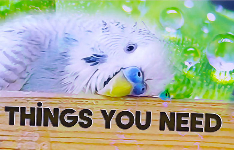 Things you need for a Budgie