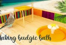 how to make luxury budgie bath with popsicles - Making Luxury Budgie Bath with Popsticles 220x150 - How to make Luxury Budgie Bath with Popsicles