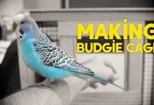 making budgie cage setup | simple and easy - budgie cage diy 220x150 - Making Budgie Cage Setup | Simple and Easy