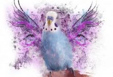 Photo of Alen AxP Budgie Merchandise | Abstract Wings