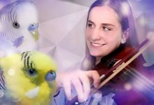 Photo of Budgie sounds – Meaning
