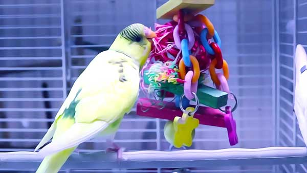 Diary of a Happy Budgerigar