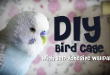 - Do it Yourself Bird Cage 220x150 - How to make Bird Cage [DIY]