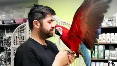 Photo of Top 5 Parrots That Make the Best Pet Birds