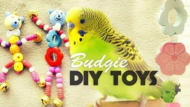 how to make budgie toys | diy toys under 10$ - diy budgie toys 390x220 - How to make Budgie Toys | DIY Toys Under 10$