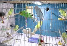 how to get the perfect cage for your budgie - How to get the PERFECT Cage for your Budgie Alen AxP 220x150 - How to get the PERFECT Cage for your Budgie [Alen AxP]