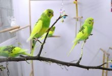 Photo of Do It Yourself Budgie Bird Cage: Everything you need to know