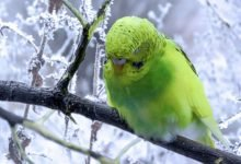 Photo of Are Budgies OK outside in Winter?