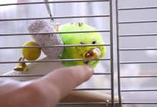 Photo of Budgie abuse | Animal abuse