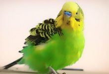Photo of How Cold is Too Cold for Budgies? [Alen AxP]
