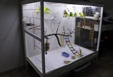 Photo of Are Acrylic Bird Cages safe for Budgerigars?