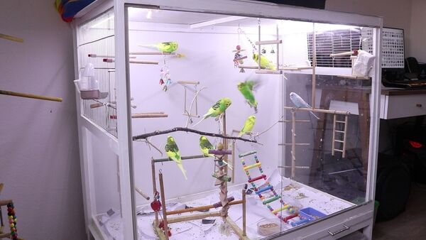 budgie glass cage