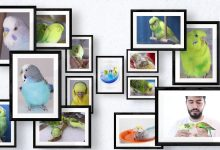 Photo of Budgie diary – Life of a bird with humans
