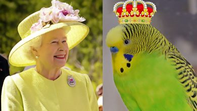 Photo of Did you know Queen Elizabeth had a Budgie?