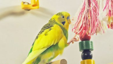 The 10 Best Budgie Toys you can buy from Amazon