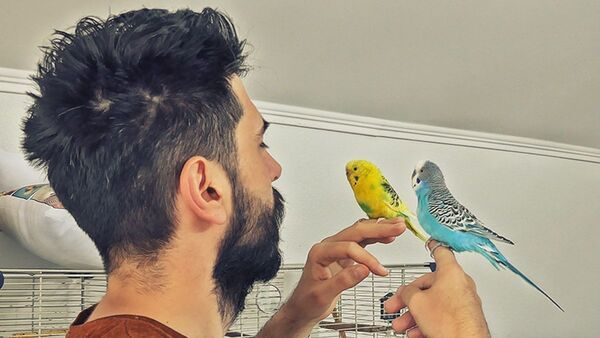 How to Regain Trust of a Budgie after you lost once