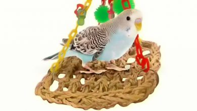Photo of Best foraging toys for Budgies from Amazon to keep them happy
