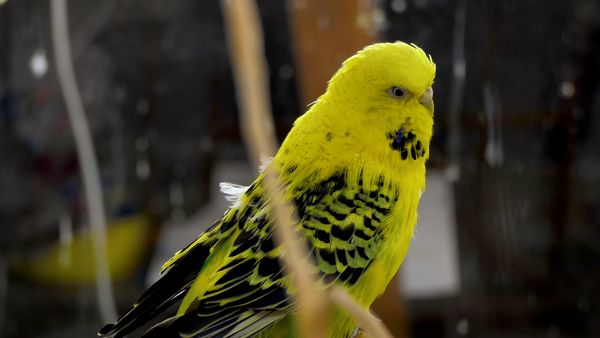 Boredom is a great cause for stress in birds