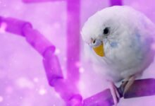 WHAT TO DO AS A FIRST TIMER WITH A BUDGIE