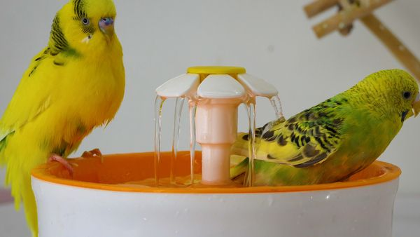 Fountain bathing ensures proper cleaning
