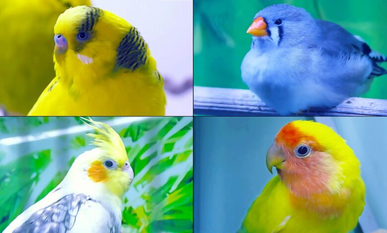 TOP 8 PARROTS AND BIRDS YOU CAN BUY IN A PET STORE