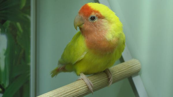 Some parrots and birds can be bought from a pet store and they can give you all love. A healthy pet together with a happy pet owner is a great combination.
