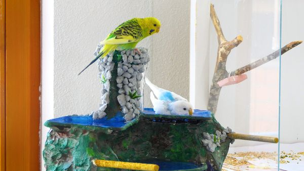 diy fountain for budgies